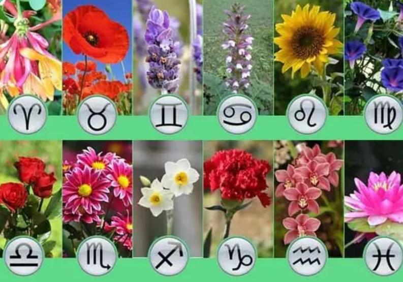 Image result for Какие цветы подходят для Вас по вашему знаку зодиаку?